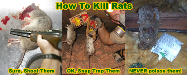 Can A Mouse Trap Hurt A Dog