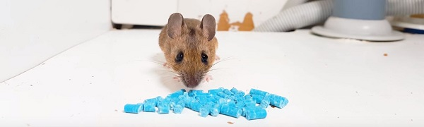 Will A Pest Control Company Remove A House Mouse